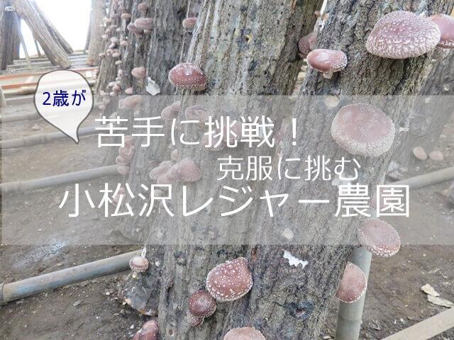 記事タイトル『小松沢レジャー農園味覚狩り体験談!苦手克服に挑んだ2歳の様子と結果』のアイキャッチ画像