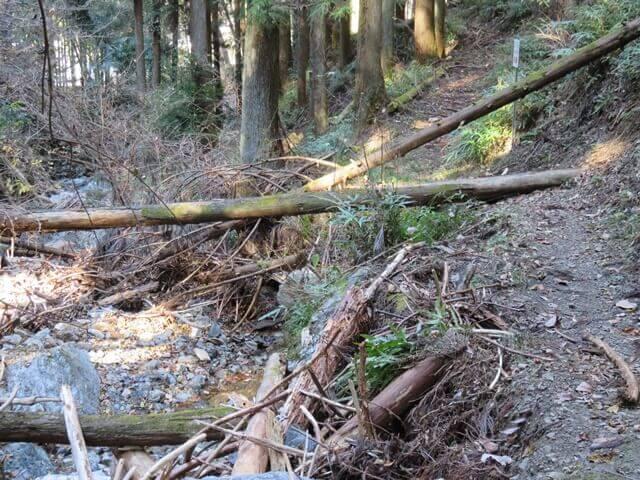 小松沢レジャー農園のハイキングコースの倒木