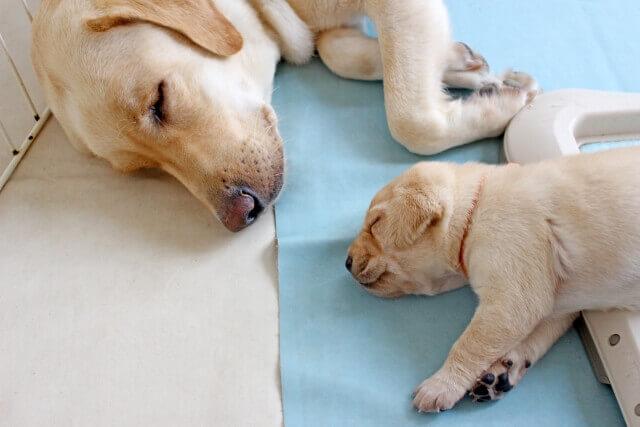 記事タイトル『寝かしつけでも寝落ちしたくないワーママの予防策!イライラの前に試すこと5選』のアイキャッチ画像