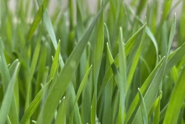 草のイメージ画像