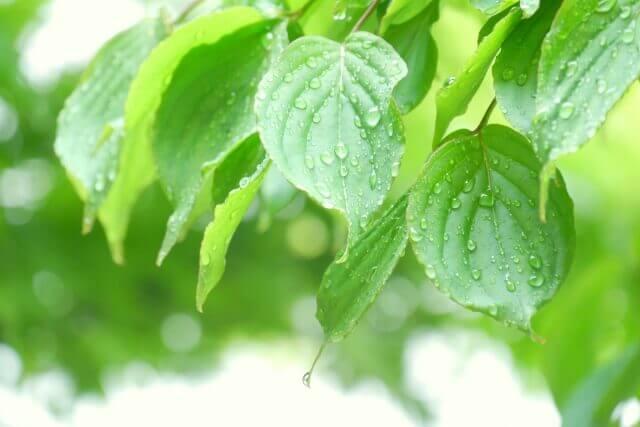 梅雨時期のイメージ画像1