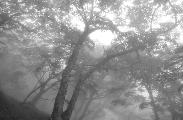 ちょっと怖い森のイメージ画像
