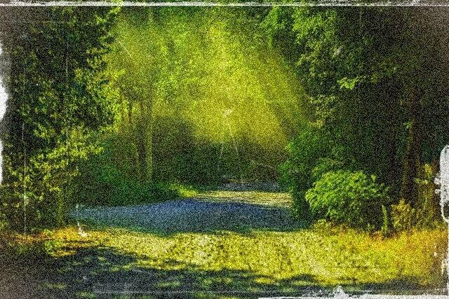 森の中のイメージ画像