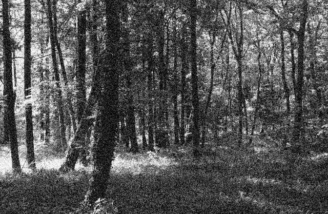 怖い森のイメージ画像
