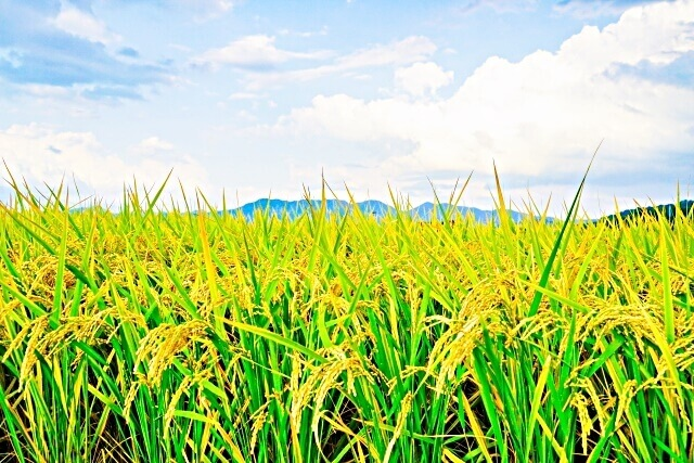 田園風景のイメージ画像