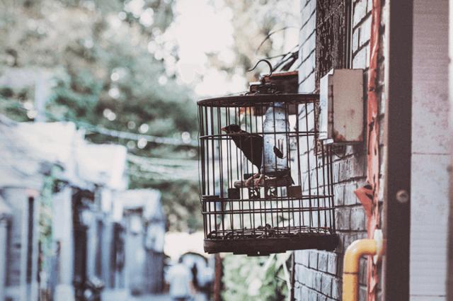 籠の中の鳥のイメージ画像