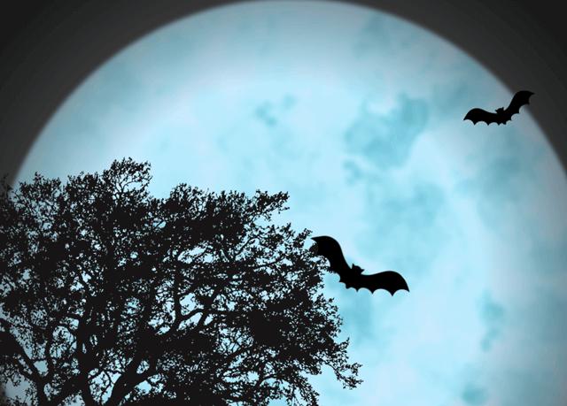 蒼い満月のイメージ画像