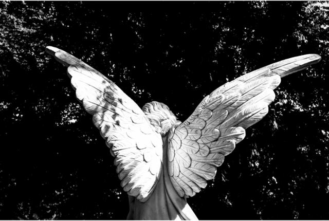 【プラチナエンド】天使の翼のイメージ画像