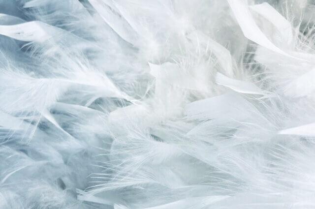 ピュアな天使の羽のイメージ画像